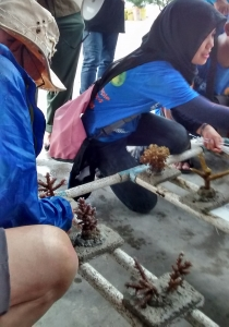 Day 4 Planting corals on metal frames